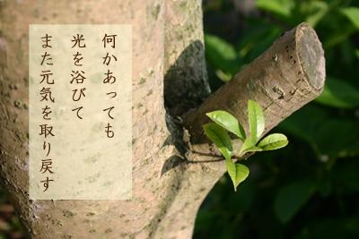 我が家の木