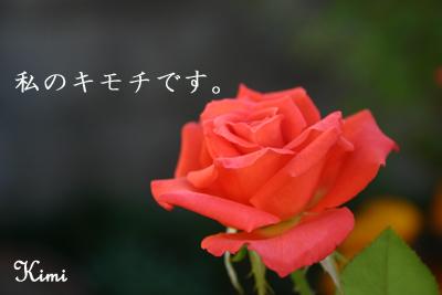 バラのキモチです