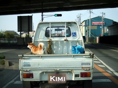 トラック犬