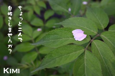 草津での写真