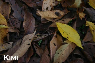 葉っぱ発見