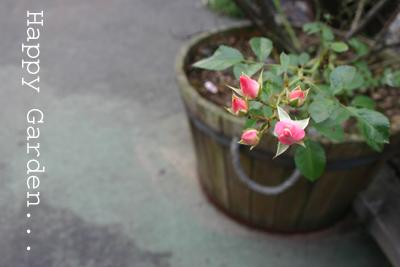 カフェのバラ