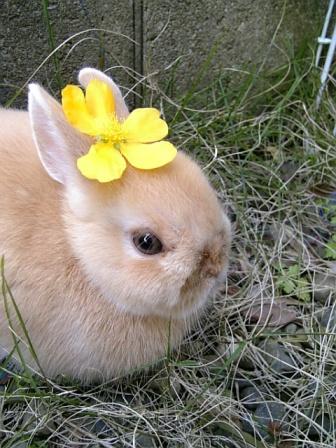 やまぶきのお花