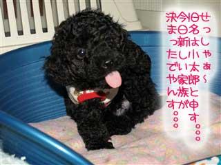 僕の旧名は小太郎だよ!