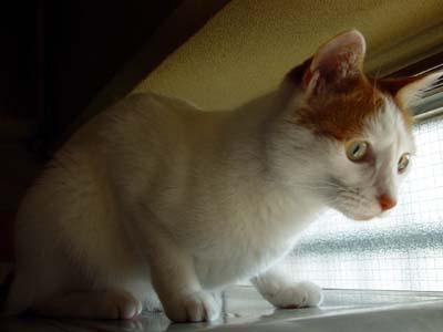 しぃちゃん、小鳥さんを見ています。