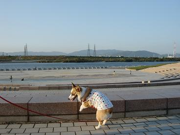in 淀川河川敷公園