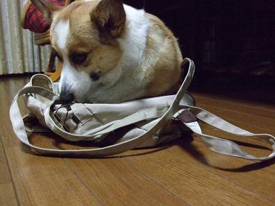 あの、私(みぃあ)の鞄なんですが…