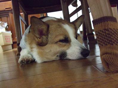 お気に入り1:テーブルの椅子の下