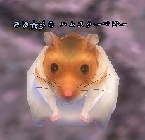 04-19 17-57 ハムちゃん♪