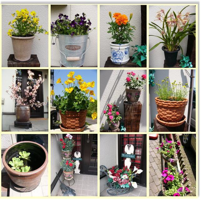 わが家の花2-1