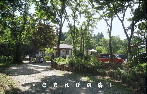 こもれびの森1