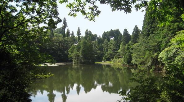 こもれびの森4