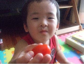 YOSHI 初トマト③