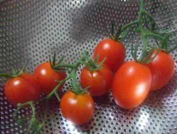 トマト二種類
