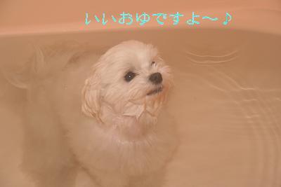 IMG_2099お湯1