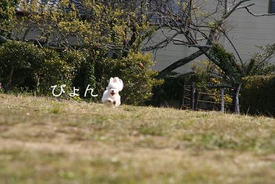 IMG_2403ワイ3