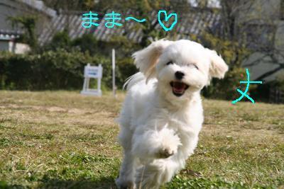 IMG_2406ワイ4