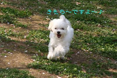 IMG_2414ワイ7