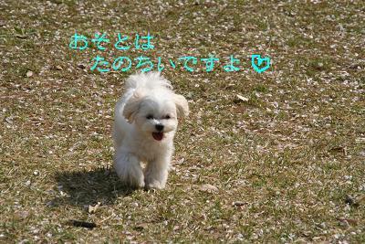 IMG_2426ワイ9