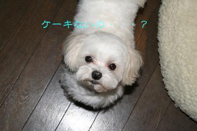 IMG_2451花7