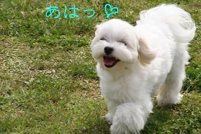 IMG_2547ラブ9