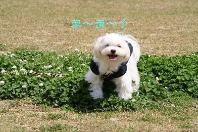 IMG_2617散歩5