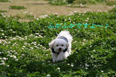 IMG_2626散歩7