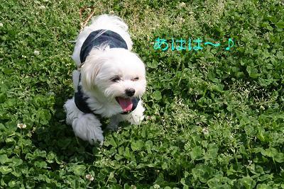IMG_2631さんぽ9