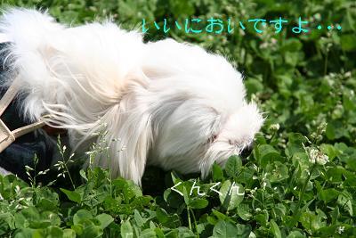 IMG_2633さんぽ10