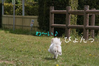 IMG_2676公園1