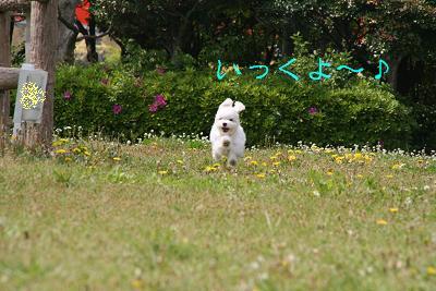 IMG_2682公園3