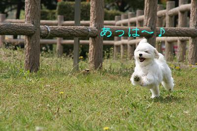 IMG_2684公園4