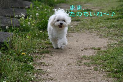 IMG_2692公園5
