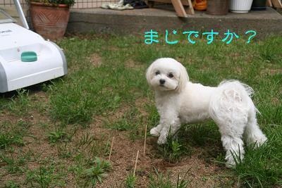 IMG_2969しば6