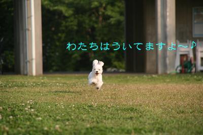 IMG_3066運動会4うく