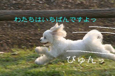 IMG_3063運動会4ビュン