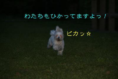 IMG_3115運動会ビカ