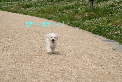 IMG_3164散歩14