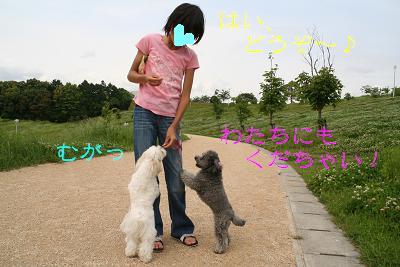 IMG_3188散歩17