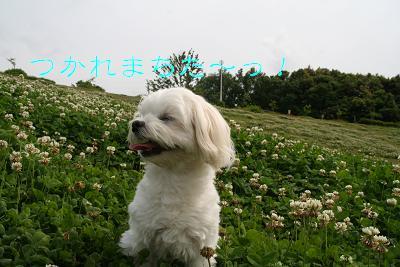 IMG_3174散歩21