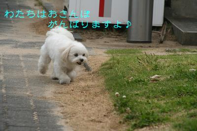 IMG_3252ダメ6