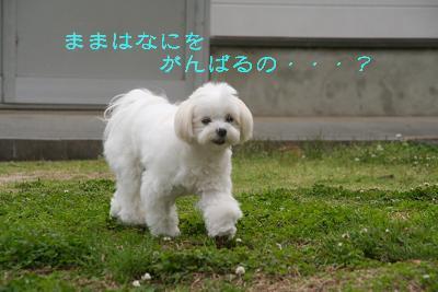 IMG_3258ダメ7