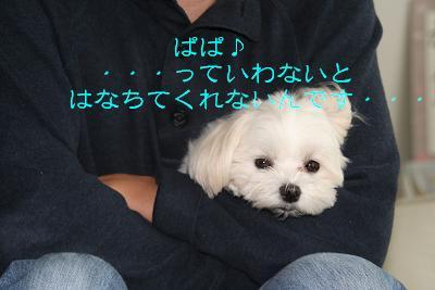 IMG_3306バトンぱぱ