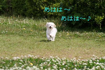 IMG_3518梅雨6
