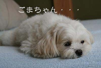 IMG_3611乱れ4