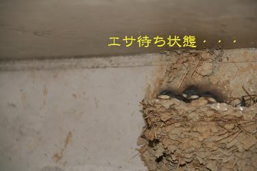 IMG_3663東海7