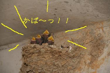 IMG_3660東海8