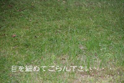 IMG_3873歌12