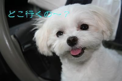 IMG_3879映画1