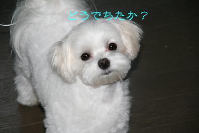 IMG_3967おやつ6